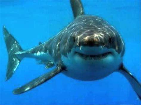 tiburon a la vista cumbia YouTube