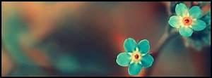 Titelbilder Facebook Ideen : nature facebook timeline cover photo blue flowers ~ Lizthompson.info Haus und Dekorationen