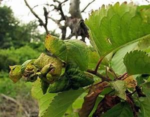 Läuse An Pflanzen : kirschbaum l use pflanzen f r nassen boden ~ One.caynefoto.club Haus und Dekorationen