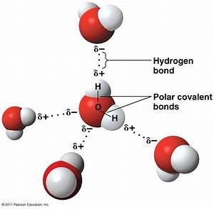 01 - Biomolecules (Watts) at University of Southern ...