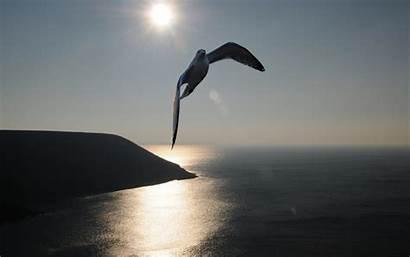 Freedom Gull Wallpapers Birds Background Desktop Backgrounds