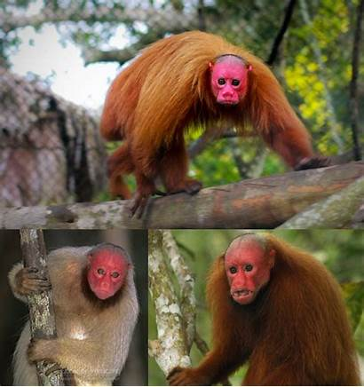 Primate Monkey Human Looks Why Face Awards