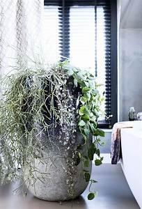 Rankhilfe Für Zimmerpflanzen : september 2016 h ngende zimmerpflanzen zimmerpflanzen des monats blumenb ro ~ Yasmunasinghe.com Haus und Dekorationen