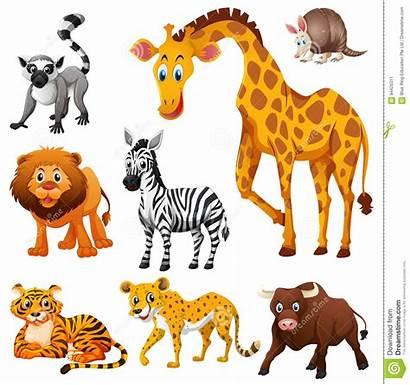 Animals Wild Kinds Different Illustration Shutterstock