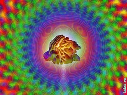 Psychedelic Animations Heart Mandalas