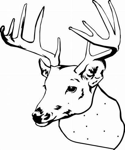 Deer Coloring Pages Printable Elk Buck Head