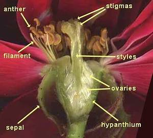 Cross Section Of Flower Worksheet