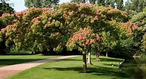 Petit Arbre Persistant : quel arbre choisir pour s 39 offrir un coin d 39 ombre au jardin ~ Melissatoandfro.com Idées de Décoration