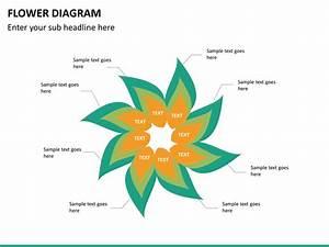 Flower Diagram Powerpoint