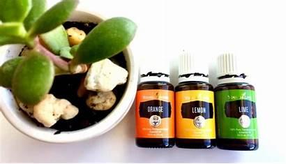 Blend Essential Diffuser Sunshine Oil Oils Citrus