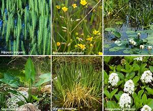 Plante Pour Bassin Extérieur : plantes aquatiques pour purer le bassin ~ Premium-room.com Idées de Décoration