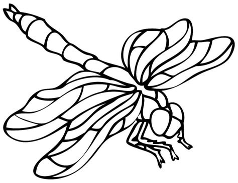 7 Best Images Of Dragonfly Printable Coloring Pages