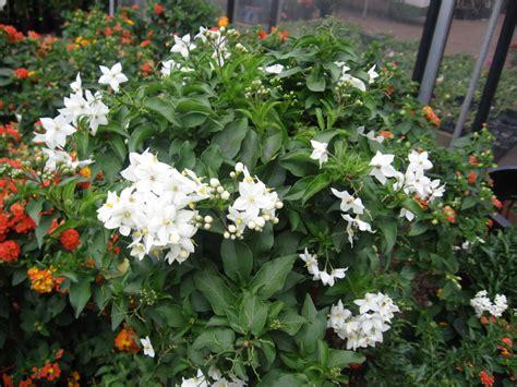 Cytotec I Alkohol Jasmin Pflanzen überwintern Levodopa Benserazid