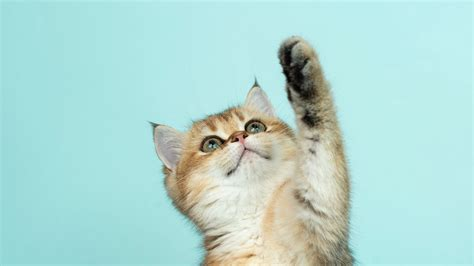 wallpaper  kitten cat cute funny