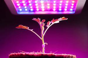 Best Led Grow Lights Reviews For 2018 By Experts In Growing