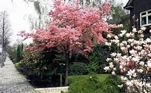Dekorative Bäume Für Kleine Gärten : die besten 25 kleine g rten ideen auf pinterest design kleiner g rten kleiner stadtgarten ~ Markanthonyermac.com Haus und Dekorationen