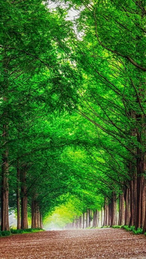 Green Forest Image by Green Forest Background Wallpapersafari