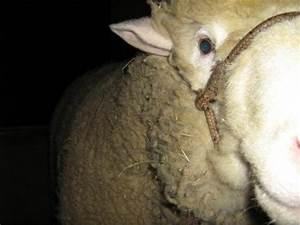 Animal En G : investigaci n experimental de suplementaci n animal en ~ Melissatoandfro.com Idées de Décoration