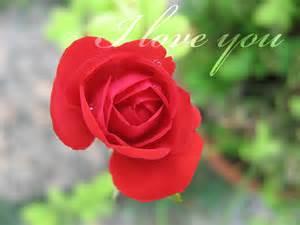I Love You Roses