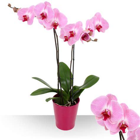 entretenir une orchidee en pot 28 images entretenir une orchid 233 e avec alysson plante