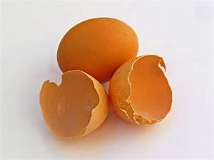 Eggshell membrane - Wikipedia Dietary Proteins