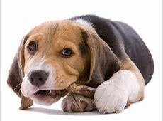 Hunde teilen gern ihr Futter – aber nur mit wahren