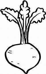 Medicine Coloring Plant Beets Tocolor 收藏自 Plants sketch template