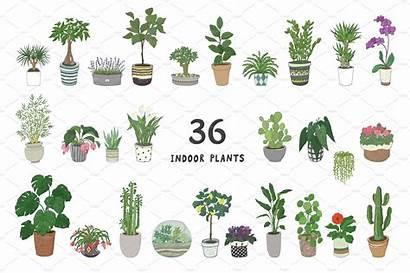 Indoor Plants Illustrations Creative Market