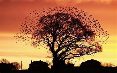 Birds Trees Autumn Houses Nature