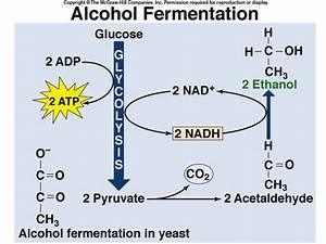 88 Best Images About Cell Energy Ps And Cr On Pinterest
