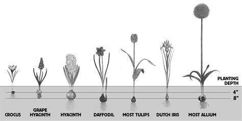 how to plant fall flower bulbs