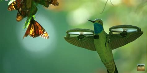 drone disguised  hummingbird captures butterfly swarm video dronedj