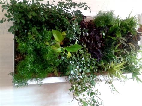 mur vegetal d interieur mur v 233 g 233 tal int 233 rieur installation de murs v 233 g 233 taux d int 233 rieur mur v 233 g 233 talis 233 int 233 rieur