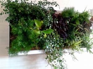 Mur Végétal Intérieur Ikea : mur v g tal int rieur installation de murs v g taux d ~ Dailycaller-alerts.com Idées de Décoration