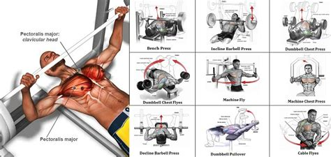 pump   pecs   chest exercises