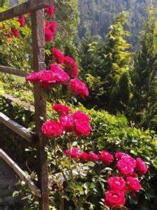 Welche Blumen Kann Man Essen : leckeres rezept f r rosengelee selber machen mit birkenzucker ~ Watch28wear.com Haus und Dekorationen