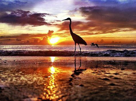 andy royston photographs fort lauderdale beach sunrise