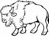 Coloring Buffalo Water Pages Buffaloes Buffalos Printable Version sketch template