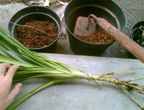 menanam bunga pot baik tanamanbaru