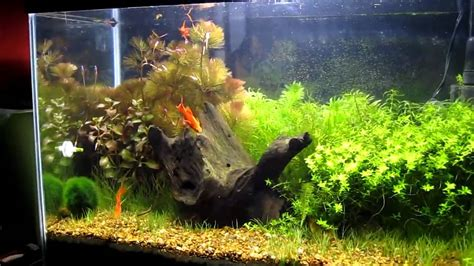 Aquascaping Tank by My 20 Gallon Aquascaping Planted Tank