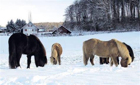 individueller energiebedarf pferdewoche