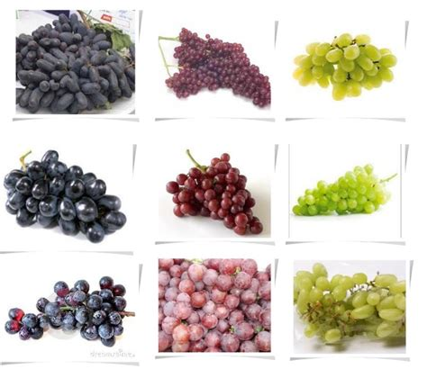 The Earth Of India All About Grapes In India