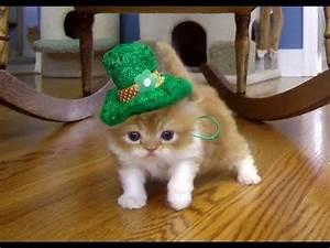 St. Patrick's Day Leprechaun March - YouTube