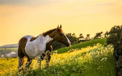 Fall Horse Wallpaper (42+ Images