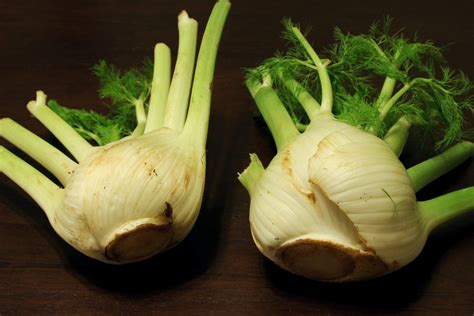 How And When To Harvest Fennel
