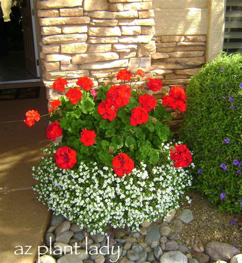 say goodbye to summer with fall blooming annuals birds and blooms