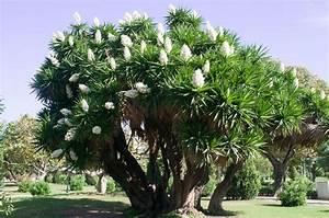 Yucca Palme Winterhart : yucca palme richtig pflegen abschneiden plantura ~ Frokenaadalensverden.com Haus und Dekorationen