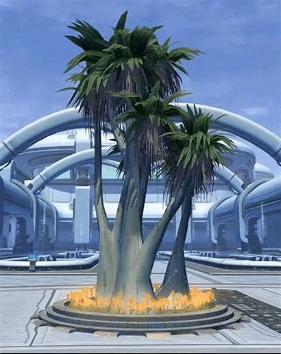 Tropical Copero Palm Tree Tor