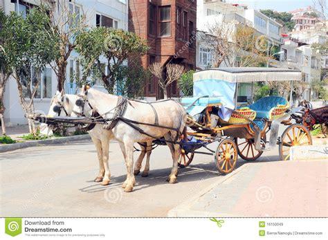 horse horses royalty dreamstime