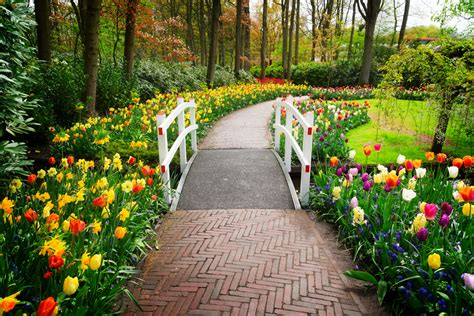 Keukenhof Shakedown Tour April